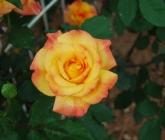 gardenpicturesapril2010_016